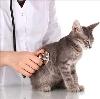 Ветеринарные клиники в Осинниках